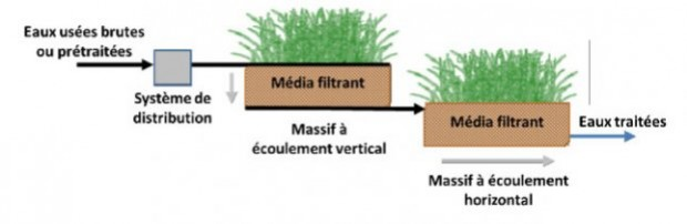 Qu'est-ce qu'un massif filtrant planté ?